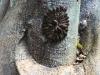 caterpillar_circle_2